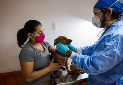 Más de 10 mil perros y gatos ha inscrito veterinaria municipal en el Registro Nacional de Mascotas